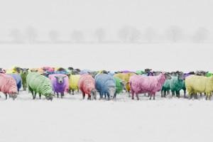 sheep-1476781_1920
