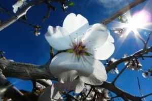 flower-678081_1920