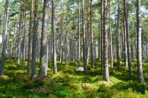 forest-272595_1280