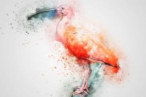 ibis-2326639_960_720