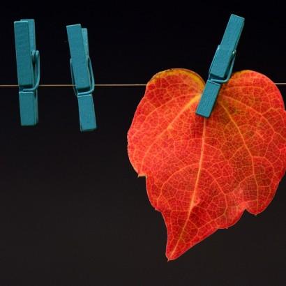 leaf-2886456_960_720