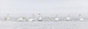 winter-2854179_960_720